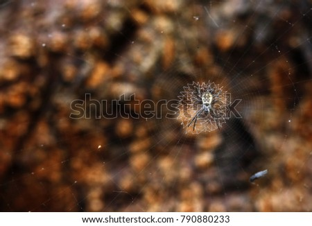 Spider on zigzag web #790880233