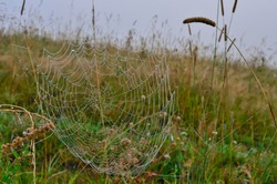 Spider's web with dew drops on blurred mysty autumnal morning background. Cobweb with brilliance of water drops, selective focus