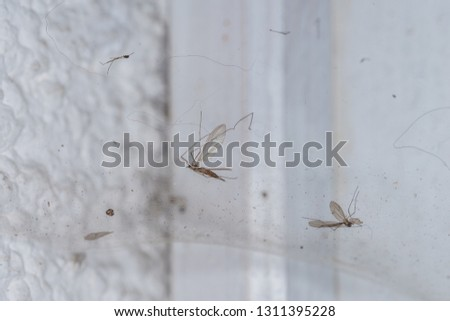 Spider's web with flies and mosquitoes, Germany