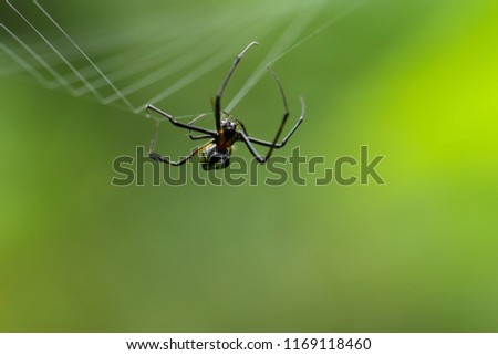 Spider spinning a web on green nature background. #1169118460