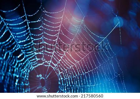 Spider web #217580560