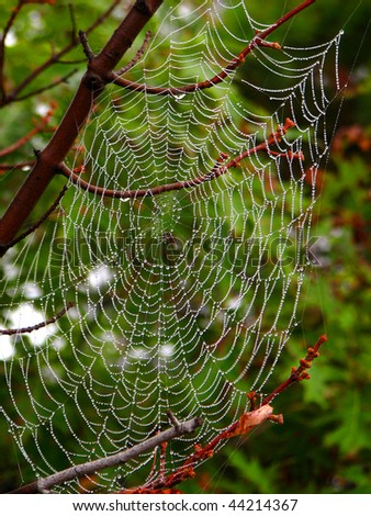 Spider Web #44214367