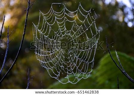 Spider web #651462838