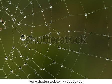 Spider web #733305733