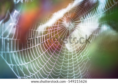 Spider web and raindrops