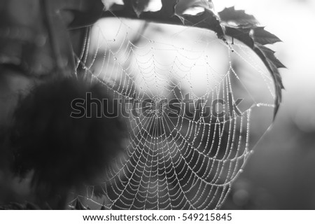 Spider web and raindrops #549215845