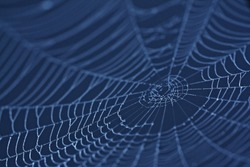 Spider Web close up in darkness