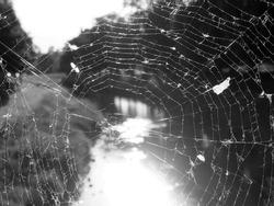 spider web illuminated by morning sun on bridge over river
