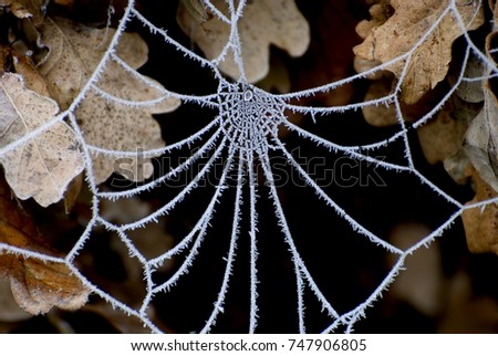 Spider web in frost #747906805