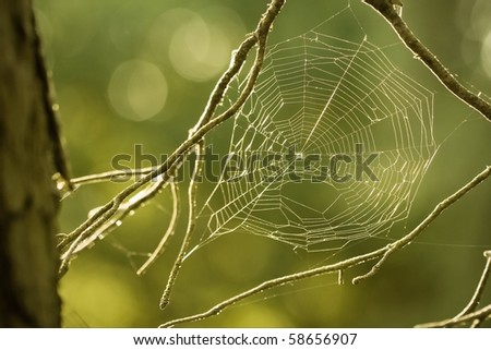 spider web in nature