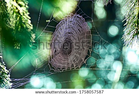 Spider web in nature morning. Cobweb in morning. Cobwed view