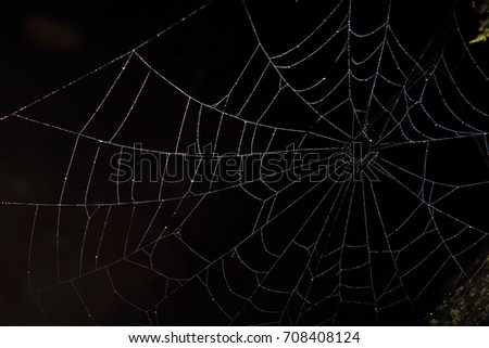 spider web in the dark as very nice natural background