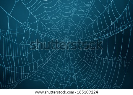 Spider Web in the darkness #185109224