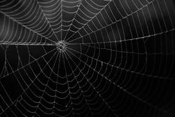 Spider web in the darks.