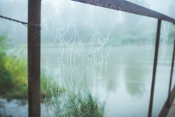 Spider web in the morning dew. Selective focus. Shallow depth of field.