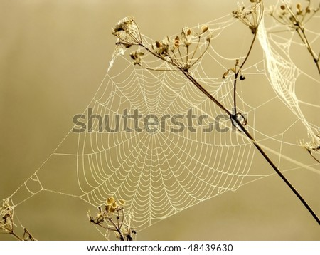 Spider web in the rays of the rising sun. Photo taken in October.