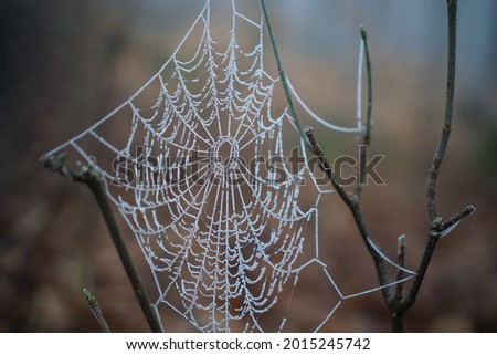 Spider web in winter. Makro. Stock foto ©