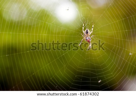 Spider web of the hunt.