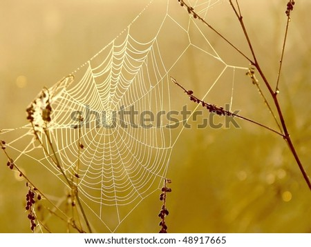 stock photo : Spider web on a meadow at sunrise. Photo taken in October.