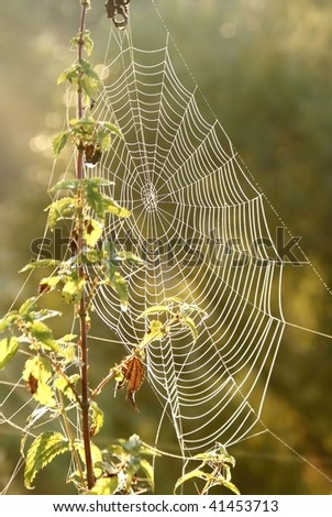 Spider web on a meadow in the rays of the rising sun. #41453713