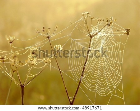Spider web on a meadow in the rays of the rising sun.