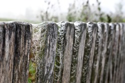 Spider web on an old wooden fence with dew drops against the morning sun - selective focus. Dewdrops and cobwebs in the grass early in the morning, fog, sunrise.