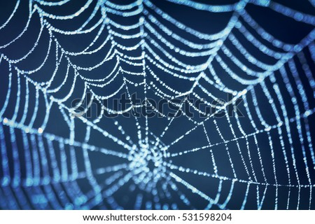 Spider web on blue blurred background; close-up