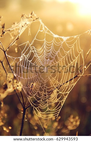 spider web on blurred Golden background with bokeh #629943593
