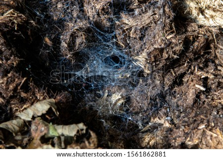 Spider web on the dirt. Webs shining in the sun. #1561862881