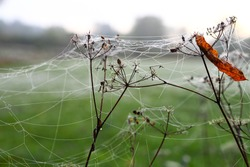 Spider web on the grass with dew drops against the morning sun - selective focus. Dewdrops and cobwebs in the grass early in the morning, fog, sunrise.
