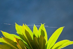 Spider web on the leaves of a green plant