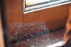 spider web on the old dirty window in the morning