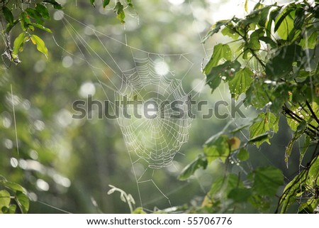Spider Web - Remote Untouched Area of Western Uganda, Africa #55706776