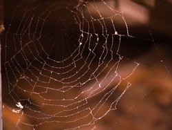 spider web stretched in the yard . Halloween background