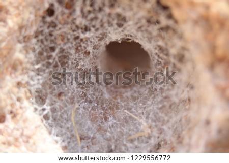 spider web tunnel #1229556772