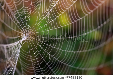 Spider web with colorful background
