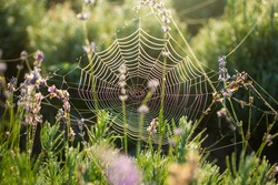 spider web with dew at dawn