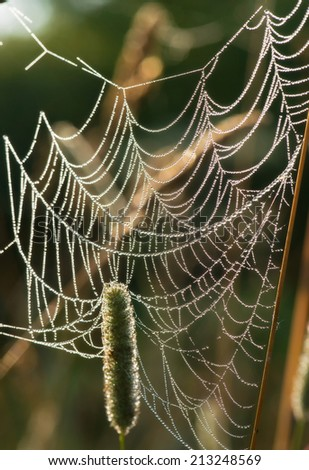 Spider web with dew drops. #213248569