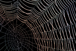 Spider web with dew in the dark