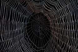 Spider web with dew in the dark