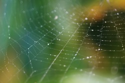 Spider web with drops of dew on green foliage background, macro