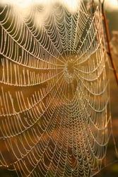 spider web with morning dew, spiderweb, cobweb