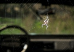 spider web with spider in an old car