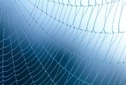 Spider web with water drops