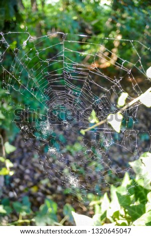 spider web with water drops, beautiful photo digital picture