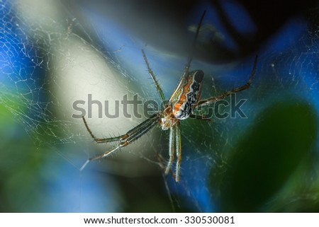 Spider webs, insect, macro insect, nature, animals.