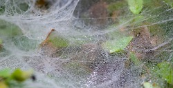 Spider webs on the grass with water drops from the morning dew, in shallow focus. Natural background.