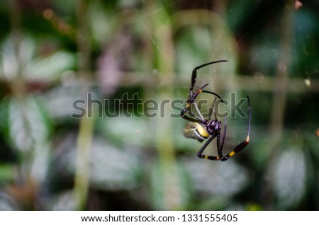 Spider with black and yellow colors on web with blurred background pic