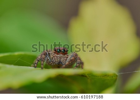 Spider with macro shot