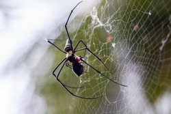 Spider with Prey.Image is soft focus.